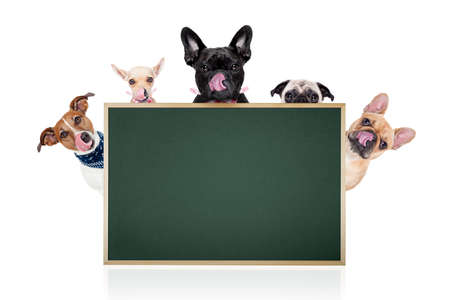 'hide out': group row of different dogs behind a blank banner ,placard or blackboard, isolated on white background Stock Photo