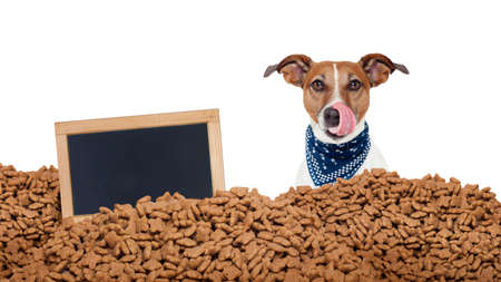 big behind: hungry jack russell dog behind a big mound or cluster of food with empty blank blackboard  , isolated on white background