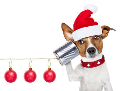 christmas people: jack russell dog listening carefully what you have to say   on the tin can telephone or phone, isolated on white background on christmas holidays