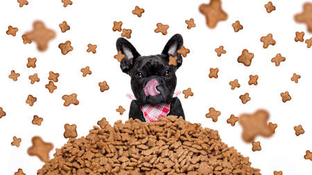 placard: hungry bulldog dog behind a big mound or cluster of food , food raining all over,isolated on white background