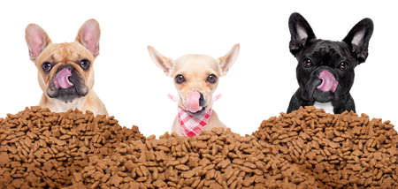 grote rij of groep van hongerige honden achter een grote heuvel van voedsel, klaar om te lunchen, op een witte achtergrond