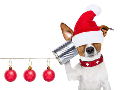 tin can telephone: jack russell dog listening carefully what you have to say hiding eyes under santa claus hat,  on the tin can telephone or phone, isolated on white background on christmas holidays