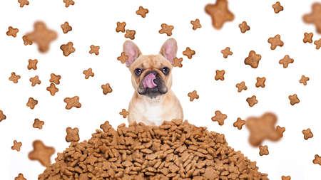 big behind: hungry bulldog dog behind a big mound or cluster of food , food raining all over,isolated on white background