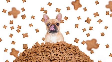 treats: perro bulldog hambre detrás de un gran montículo o grupo de alimentos, comida lloviendo todo el cuerpo, aislado sobre fondo blanco