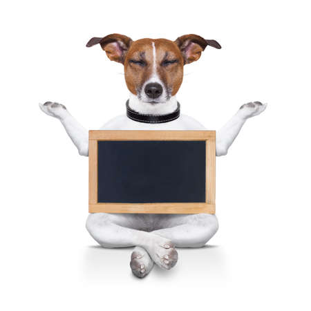 dream body: yoga dog posing in a relaxing pose with both arms open and closed eyes,while holding a blank empty placard or blackboard,  isolated on white background
