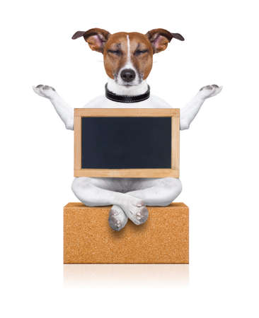 placard: yoga dog posing in a relaxing pose with both arms open and closed eyes,while holding a blank empty placard or blackboard,  isolated on white background