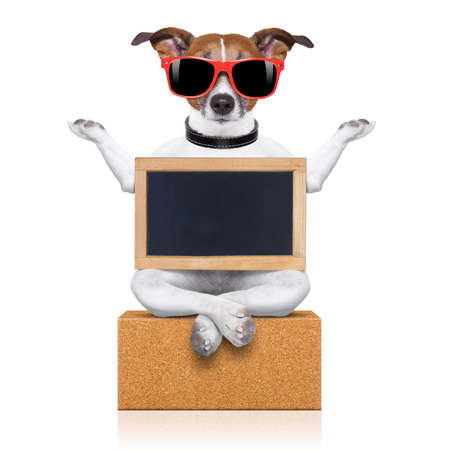funny animals: yoga dog posing in a relaxing pose with both arms open and closed eyes,while holding a blank empty placard or blackboard,  isolated on white background