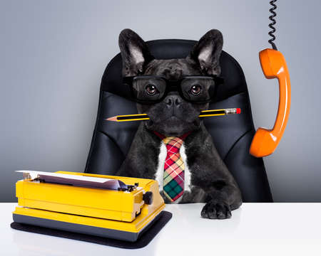 オフィス実業家フレンチ ブルドッグ犬ボスとシェフは、休暇のため困って革張りの椅子と机の上に座って、秘書としてタイプライター