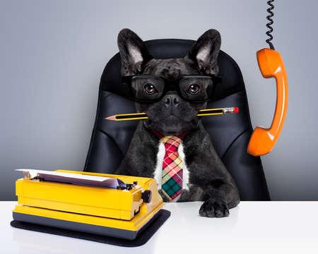escritório empresário cão buldogue francês como chefe e chefe, com máquina de escrever como secretária, sentado na cadeira de couro e mesa, na necessidade de férias