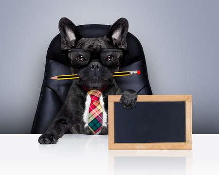 pizarron: oficina de negocios perro bulldog franc�s con la pluma o un l�piz en la boca, detr�s de la pizarra en blanco vac�o, sentado en una silla de cuero