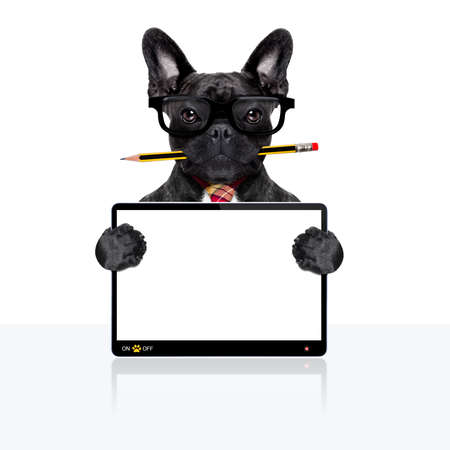 placard: office businessman french bulldog dog with pen or pencil in mouth  , behind laptop pc tablet screen ,  isolated on white background