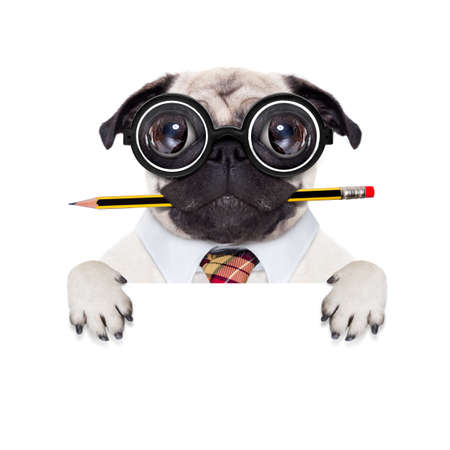 dumb crazy pug dog with nerd glasses as an office business worker,behind blank empty banner or placard,  isolated on white background Stock Photo - 49248068