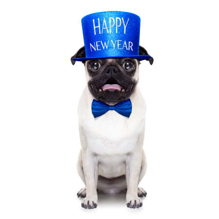 pug dog  toasting for new years eve , isolated on white background Stock Photo