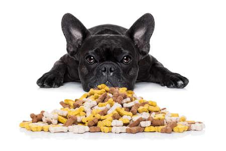 treats: perro bulldog hambre detrás de un gran montículo o grupo de alimentos, aislado en fondo blanco