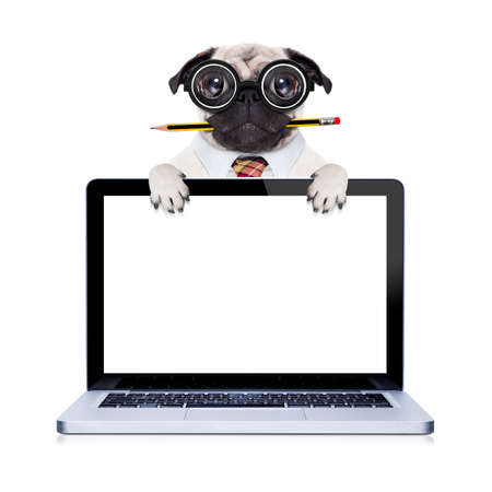 pug: dumb crazy pug dog with nerd glasses as an office business worker with pencil in mouth ,behind laptop pc tablet computer screen,  isolated on white background Stock Photo