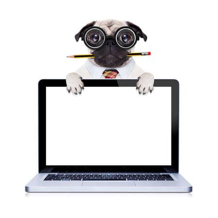 dumb fou chien carlin avec des lunettes nerd comme un travailleur de l'entreprise de bureau avec un crayon dans la bouche, derrière l'écran d'ordinateur tablette pc portable, isolé sur fond blanc
