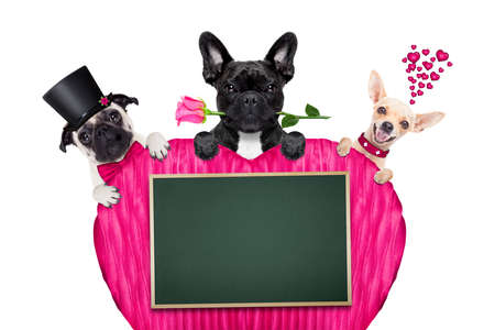 birthday presents: group, row or team of dogs around valentines banner or placard, with blackboard inside, isolated on white background