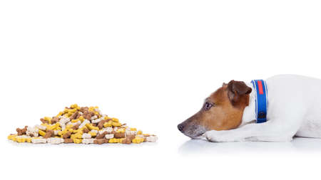 mound: hungry  jack russell dog beside a big mound or cluster of food , isolated on white background