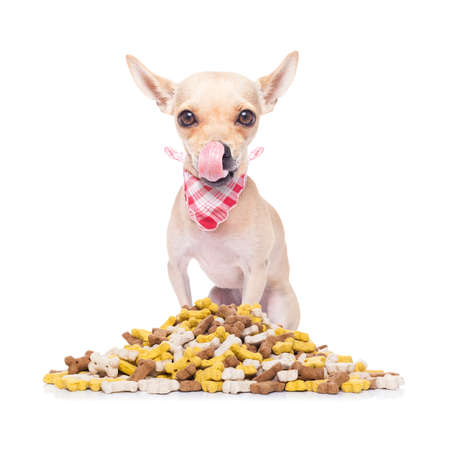 cluster: hungry  chihuahua dog beside a big mound or cluster of food , isolated on white background