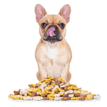 hambriento perro bulldog francés detrás de un gran montículo o grupo de alimentos, aislado en fondo blanco