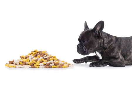 cluster: hungry  french bulldog  dog behind  a big mound or cluster of food , isolated on white background