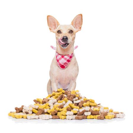 huesos: perro chihuahua hambriento detrás de un gran montículo o grupo de alimentos, aislado en fondo blanco