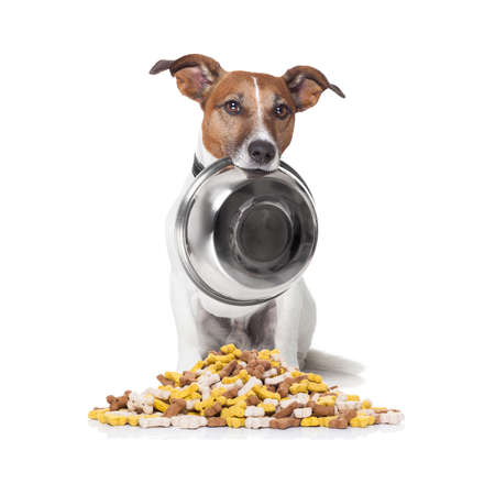 hungry  jack russell dog behind  a big mound or cluster of food , isolated on white background