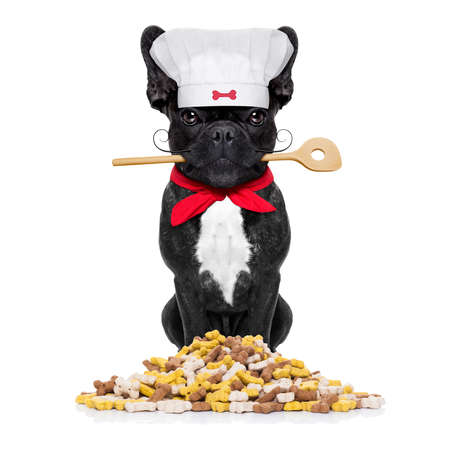 dog biscuit: french bulldog dog chef cook  with kitchen spoon in mouth, isolated on white background