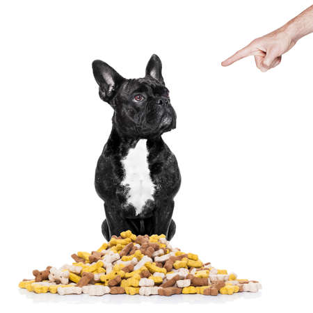 hungry  french bulldog  dog behind  a big mound or cluster of food ,punished by owner, isolated on white background