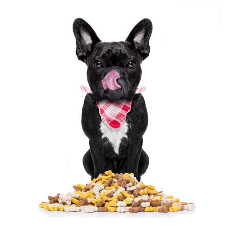 feed: hungry  french bulldog  dog behind  a big mound or cluster of food , isolated on white background