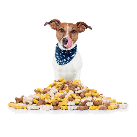 canine: hungry  jack russell dog behind  a big mound or cluster of food , isolated on white background