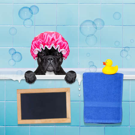 towel: french bulldog dog in a bathtub not so amused about that , with yellow plastic duck and towel,wearing a bathing cap, banner or blackboard added