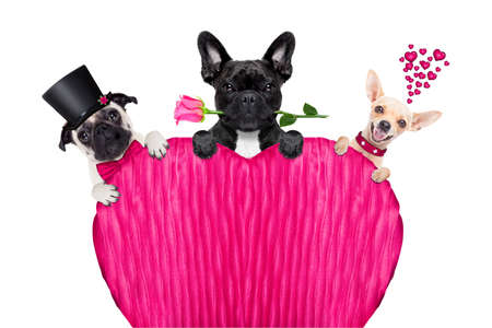 rose: group, row or team of dogs around valentines banner or placard, isolated on white background