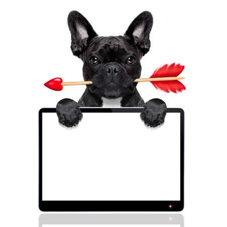 valentines perro bulldog francés en el amor que sostiene una cupidos flecha con la boca, detrás de la pantalla de la tableta de ordenador pc vacío en blanco, aislado en fondo blanco