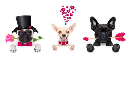 birthday presents: group, row or team of dogs around valentines banner or placard, isolated on white background