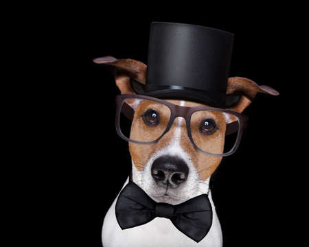 black hat: jack russell terrier dog isolated on black background looking at you  with reading glasses  and black hat, looking very smart