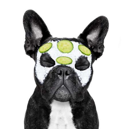 Cane bulldog francese rilassante con la maschera di bellezza nel centro benessere termale, ottenere un trattamento viso con maschera crema idratante e cetriolo, a letto con gli occhi chiusi Archivio Fotografico - 51512983