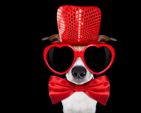 jack russell terrier: jack russell terrier dog isolated on black background looking with red heart valentines sunglasses and funny party hat and tie