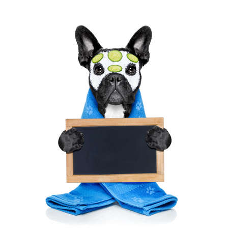 body grooming: french bulldog dog relaxing  with beauty mask in   spa wellness center ,getting a facial treatment with  moisturizing cream mask and cucumber ,behind banner or placard, isolated on white background
