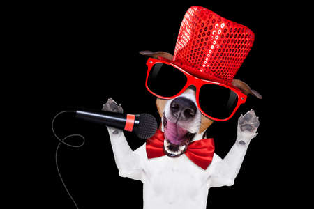 jack russell terrier dog isolated on black background singing with microphone a karaoke song in a night club Stock Photo