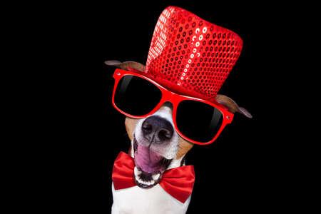 Jack Russell terrier perro aislado en el fondo negro, con gafas de sol y sombrero divertido del partido y empate