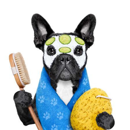 полотенце: французский бульдог собака, расслабляющий с маской красоты в спа-оздоровительном центре, получать уход за кожей лица с увлажняющим крем-маска и огурца, губки и щетки, изолированных на белом фоне Фото со стока