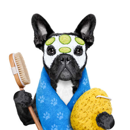 baÑo: francés bulldog relajante con máscara de belleza en el centro de spa, que consigue un tratamiento facial con máscara de crema hidratante y pepino, esponja y pincel, aisladas sobre fondo blanco Foto de archivo
