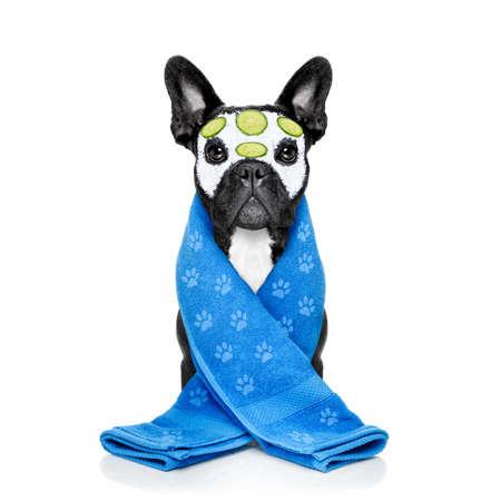 Cane bulldog francese rilassante con la maschera di bellezza nel centro benessere termale, ottenere un trattamento viso con maschera crema idratante e cetriolo, spugna e spazzola, isolato su sfondo bianco Archivio Fotografico - 51513039