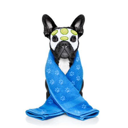 body grooming: french bulldog dog relaxing  with beauty mask in   spa wellness center ,getting a facial treatment with  moisturizing cream mask and cucumber , sponge and brush, isolated on white background