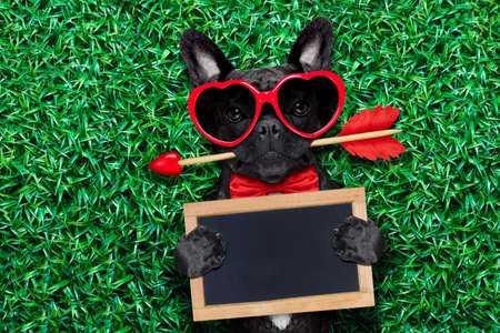 dog bite: valentines french bulldog dog in love holding a cupids arrow with mouth ,wearing sunglasses,lying on meadow grass in park , holding blackboard or placard