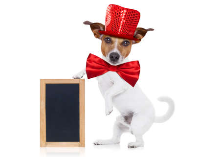jack russell terrier dog isolated on white background , funny party hat and tie, holding a blackboard or placard with paw