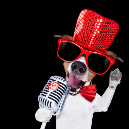 jack of clubs: jack russell terrier dog isolated on black background singing with microphone a karaoke song in a night club Stock Photo