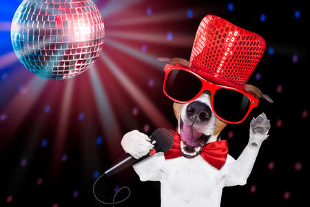 jukebox: jack russell terrier dog isolated on black background singing with microphone a karaoke song in a night club, disco ball in background