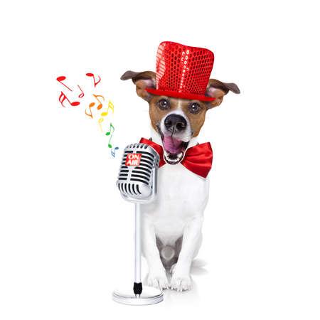 microfono antiguo: jack russell perro, cantando una canción de karaoke o leer las noticias usando un micrófono o un micrófono retro, sombrero de fiesta y el lazo rojo, aislado en fondo blanco